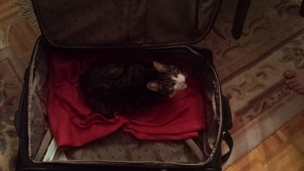 Marco_Xmas_suitcase